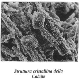 ImmCalcite