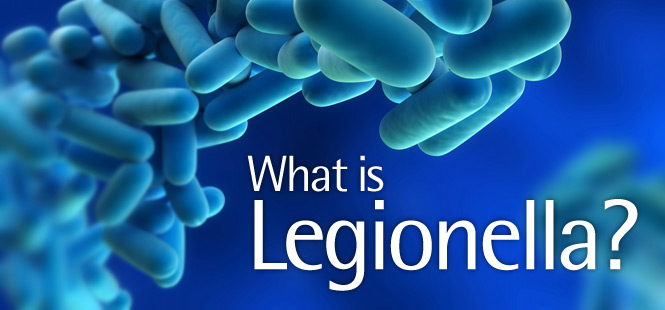 what is legionella