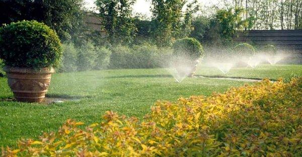 Vivai e giardini perch il calcare crea problemi for Irrigazione giardino