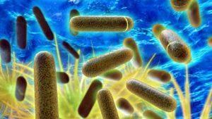 Legionella e Kalko Tronic